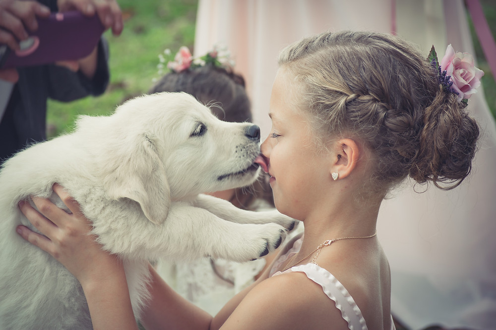 maryland Massachusetts pennsylvania east coast english golden retriever puppies for sale