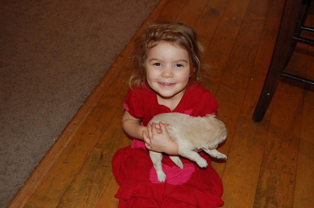 ENS Goldendoodle Breeder, Benefits For Early Socialization