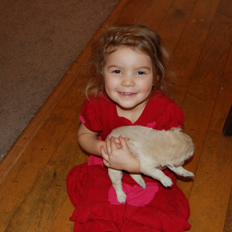 Goldendoodles: 5 Benefits For Early Socialization! (2021)