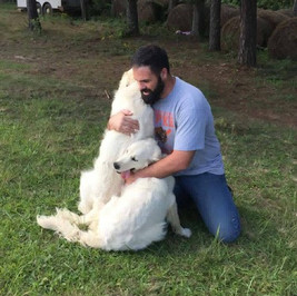 english creaenglish cream golden retriever puppies for sale pittsburgh pennsylvania