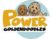 mini english teddybear goldendoodle puppies los angeles california
