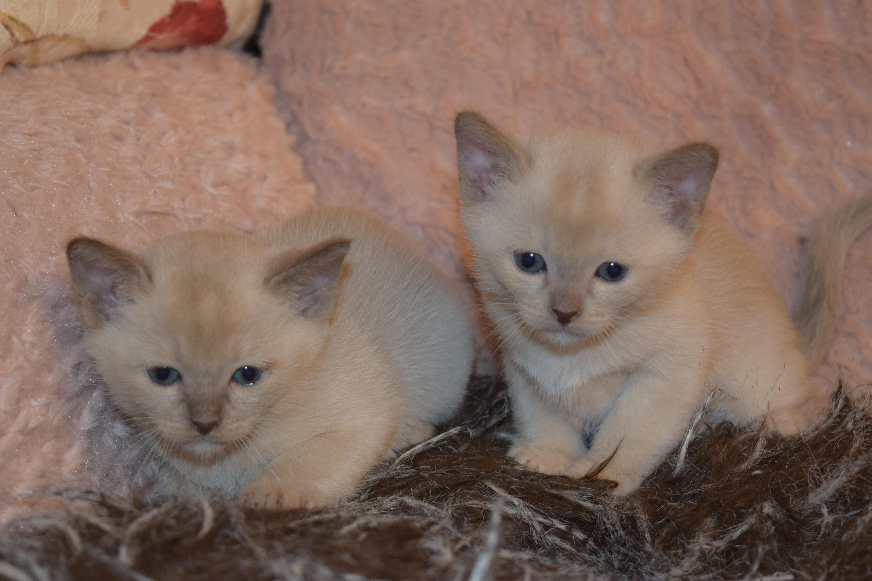 Bonnie's Kittens