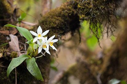Wilde orchidieeën.jpg