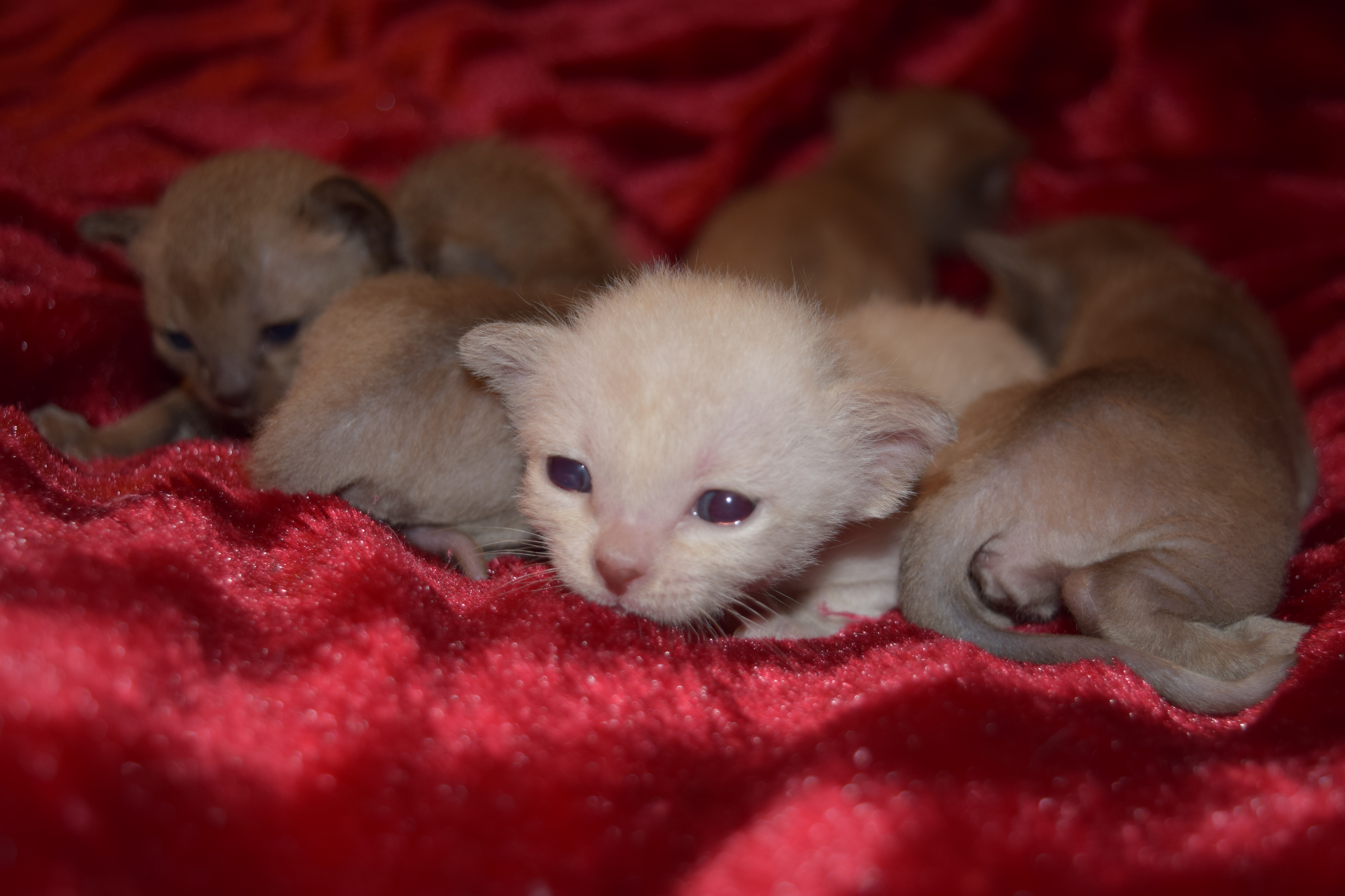 Tink's Kittens
