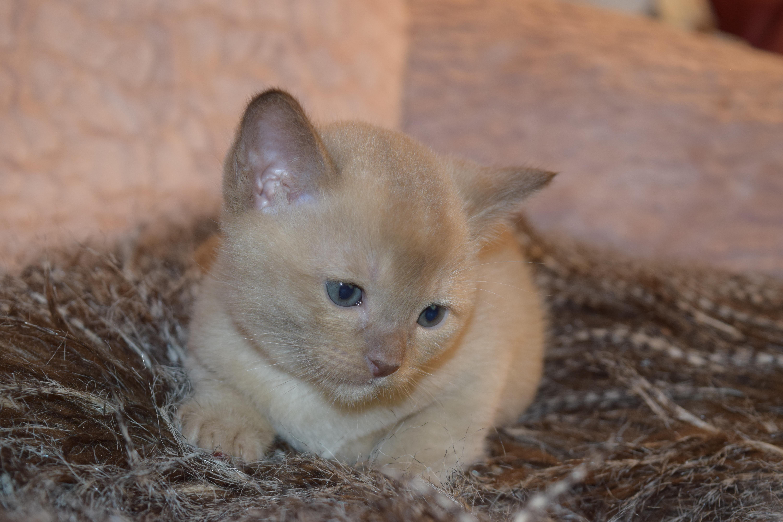 Bonnie's Kitten
