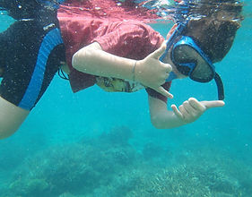plongée, snorkeling, baleines, requins, palmes masque, océan indien