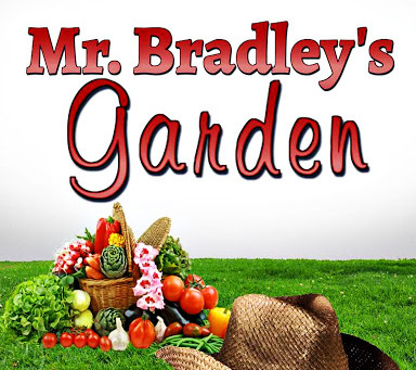 Short Story Spotlight: Mr. Bradley's Garden
