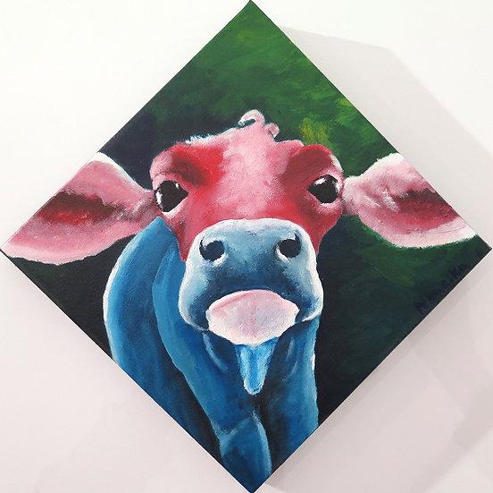 La vache a Hervé