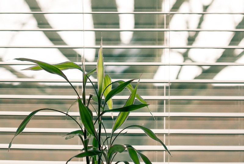 Focus of a plant in a window with a barren tree in the background