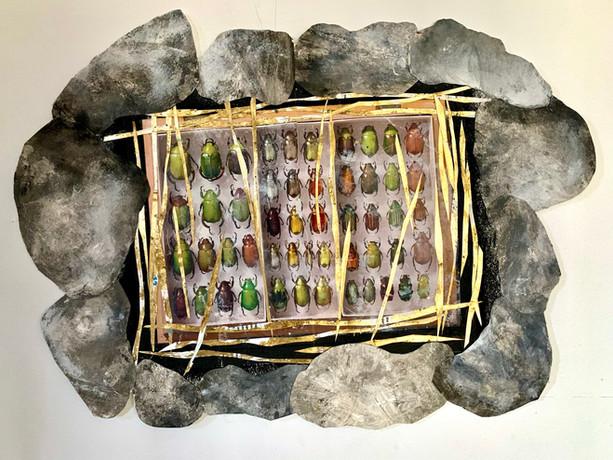 Rocks and Beetles