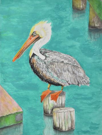 Apalachicola, Florida Pelican