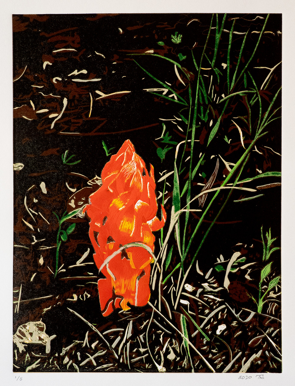 Forest Floor Snow Plant