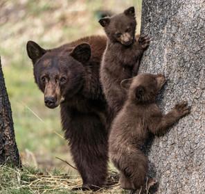 Bear Family Portrait