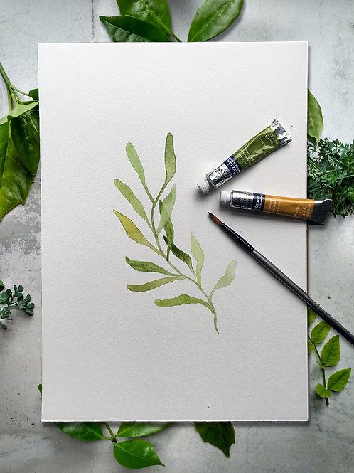 Eucalyptus Leaf Watercolour Print