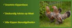 Kippen Te Koop | De Kippenspecilist