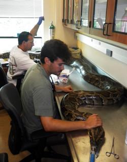 Brian J. Smith Python Surgery