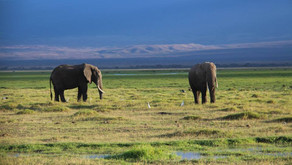 Парк AMBOSELI - Визитная карточка Кении