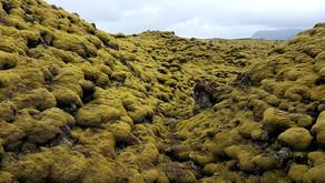 Удивительный мох Исландии