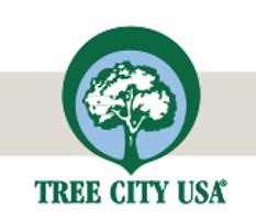 treecity.png