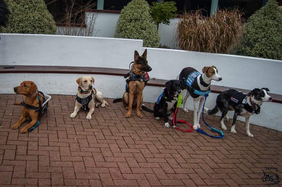 Dom, Archie, Snoop, Karma, Vali & Sargen