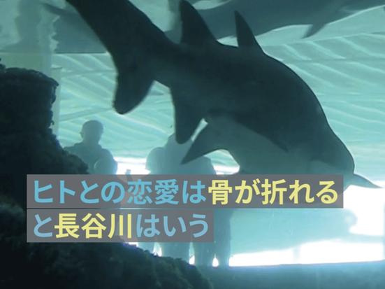 ヒトとサメは愛しあえるか? アーティスト 長谷川愛