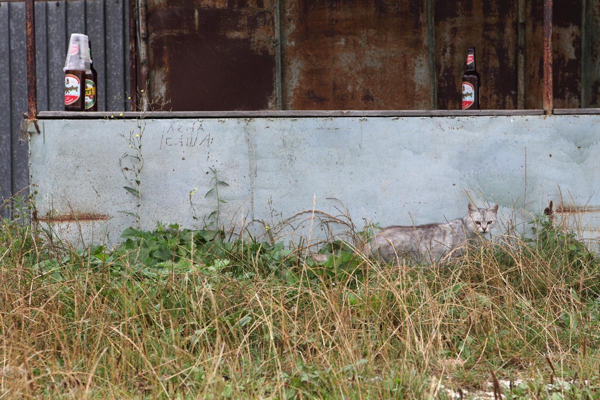 cat42