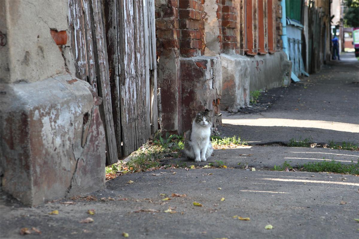 cat44