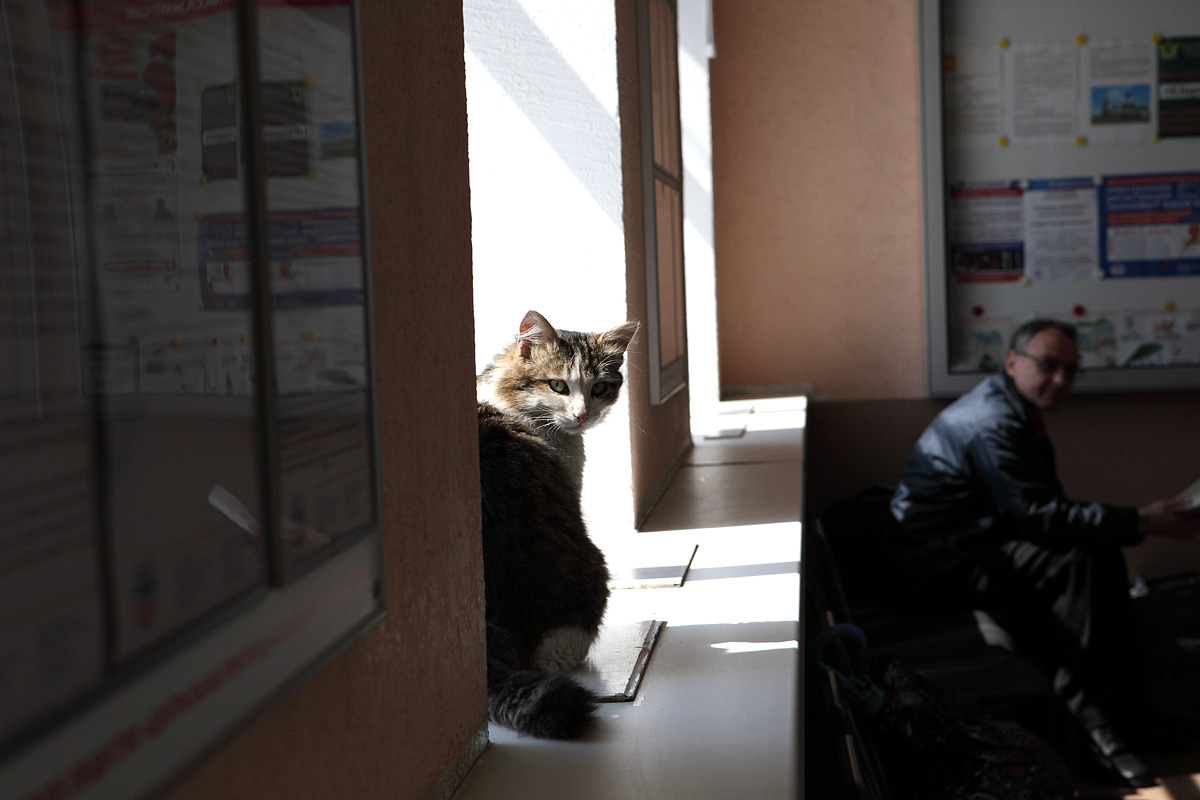cat25