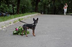 Dog75