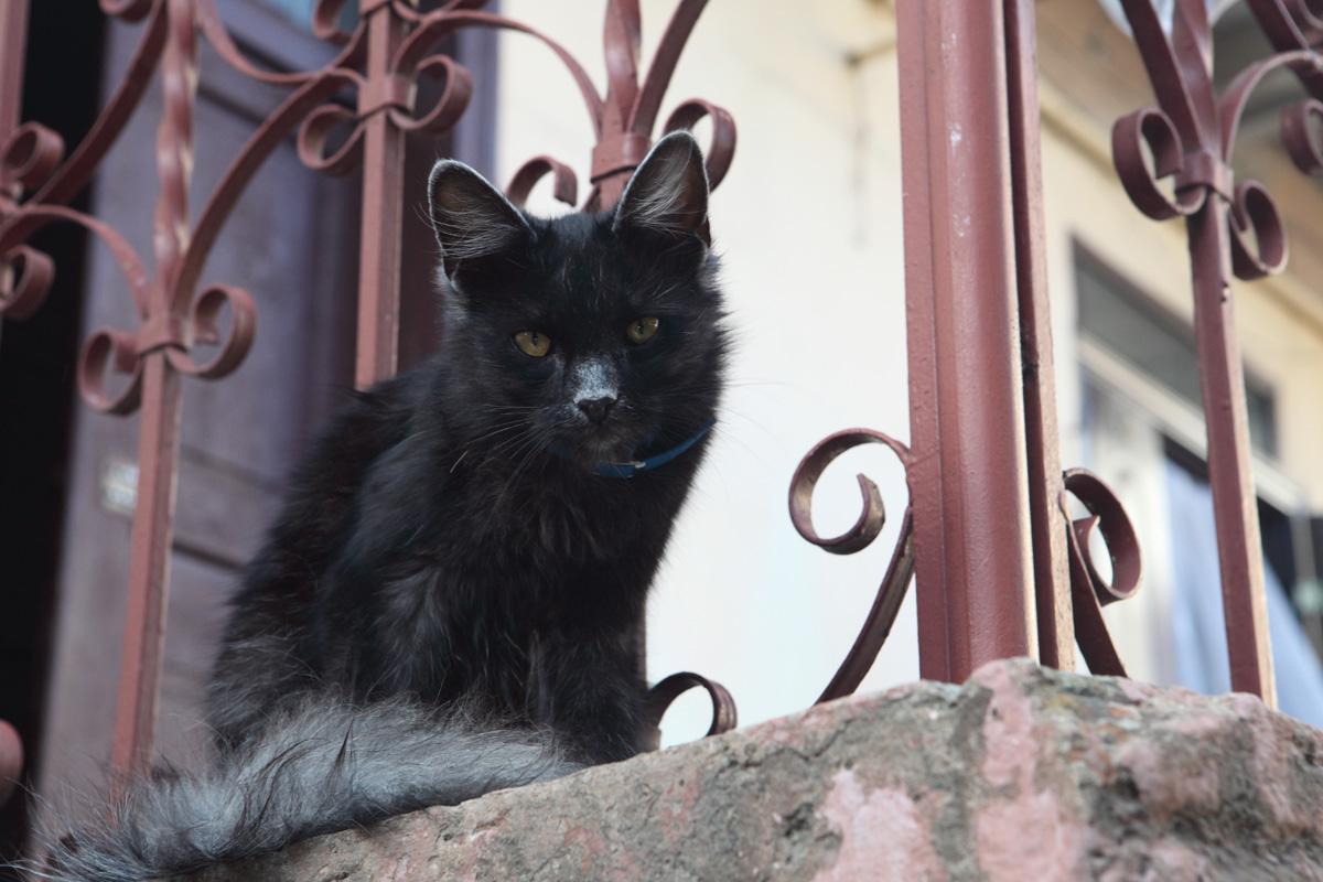 cat50