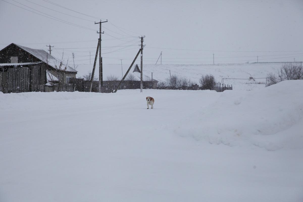 Dog15