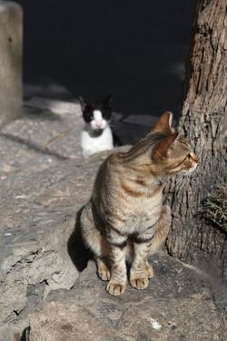cat10