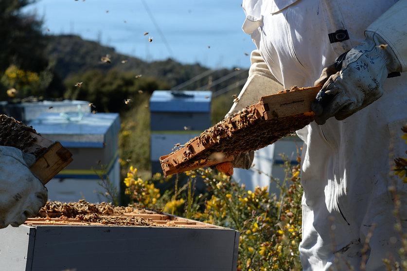 養蜂4.jpg