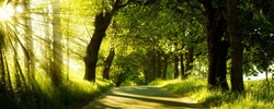 free_wallpaper_of_natural_scenery__forest_in_the_morning