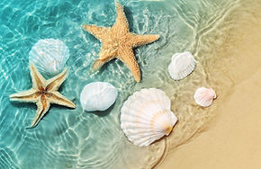 Starfish and seashell on the summer beac