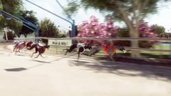 greyhounds_6.1_Snap