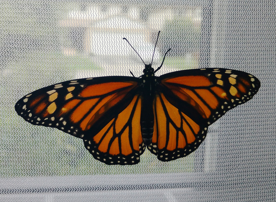 In Awe of Monarchs
