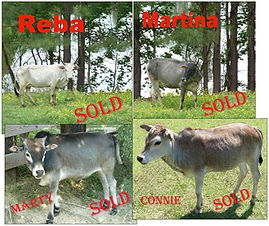 SOLD-Reba-Martina-Marty-[1].jpg