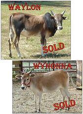 Waylon-Wynonna-SOLD-cropped[1].jpg