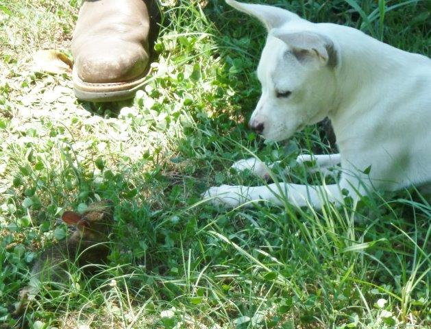 Halo Finds A Little Bunny!