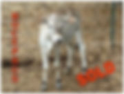 Bocephus-SOLD[1].jpg