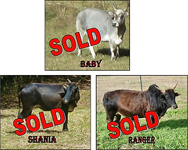 SOLD Baby, Ranger, Shania 12-9-19.jpg