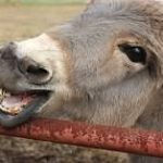 Smiling-Joe-Henry-12-21-15-e146393612259