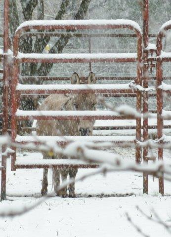 Joe Henry In The Snow!