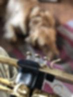 Horn and Dog.jpg