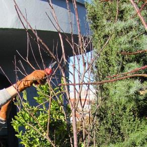 ¿Cuándo toca podar los arbustos de flor?