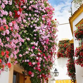 ¡Pon tus balcones en flor! (1ª parte)
