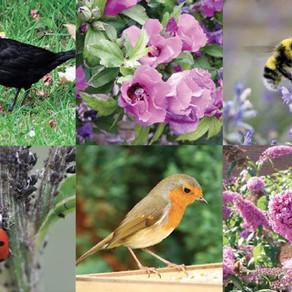 Los animales más útiles del jardín