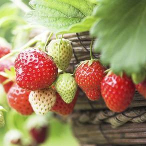 Un jardín con sabor a fresas