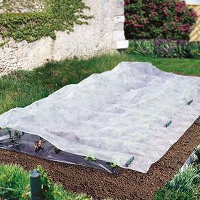 Cómo adelantar las siembras y cultivos